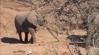 getlinkyoutube.com-Safari in zimbabwe