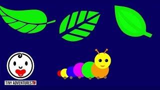 getlinkyoutube.com-Baby Sensory - Little Caterpillar (Infant Visual Stimulation)