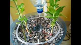 getlinkyoutube.com-PET Bottle Aquaponics System , A Beginner How to Video on DIY Crafts and Recycling Ideas