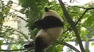 getlinkyoutube.com-Falling Panda
