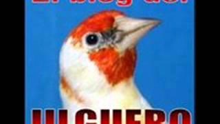 getlinkyoutube.com-Educacion jilgueros a cante limpio
