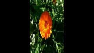 getlinkyoutube.com-Dua (Dhikr) Morning/Evening |against jinn, bad people, enemies, sihr, black magic, shaytan | (long)