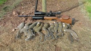 getlinkyoutube.com-Pest Control with Air Rifles - Sniper Cam Squirrel Shooting - Pleasant Peasant Pheasants