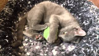 Roland plays with Dryer Ball