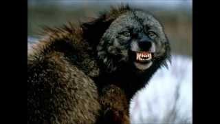 Top 17 plus fortes morsures des animaux !