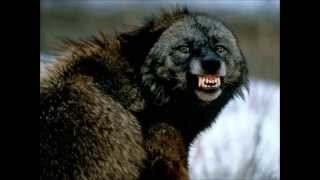 getlinkyoutube.com-Top 17 plus fortes morsures des animaux !