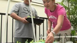 getlinkyoutube.com-วิธีปลูกผักไฮโดรโปนิกส์ แบบง่ายๆ