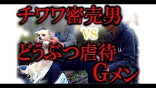 getlinkyoutube.com-実録!犯罪列島2015冬 チワワ密売男vs動物虐待Gメン