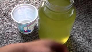 getlinkyoutube.com-Daphnia Culture: Feeding Green Water
