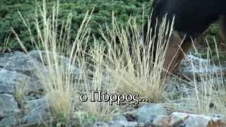 getlinkyoutube.com-Κυνήγι λαγού- ΝΕΑ ΤΑΙΝΙΑ DVD ΕΛΛΗΝΙΚΟΣ ΙΧΝΗΛΑΤΗΣ μέρος2ο