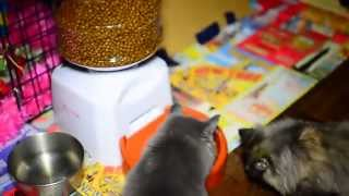 getlinkyoutube.com-แกะกล่องเครื่องให้อาหารสัตว์เลี้ยงอัตโนมัติ Perfect Pet Dinner