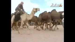 getlinkyoutube.com-مزاين الكويت 2014 | الطياحات | مسيرة منقية / محمد بن رجاء الشكرة الدوسري