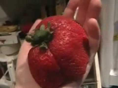 worlds largest strawberry contest