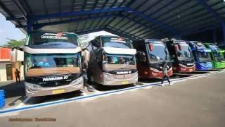 getlinkyoutube.com-Perang Telolet Semua Bus Premium Class Pandawa87