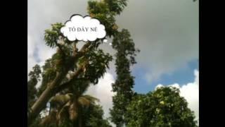 getlinkyoutube.com-Hướng Dẫn Tìm Tổ Chim Cu Gáy Cách Dễ Nhất
