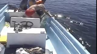 getlinkyoutube.com-Un homme va faire une découverte choquante en s'approchant d'une baleine