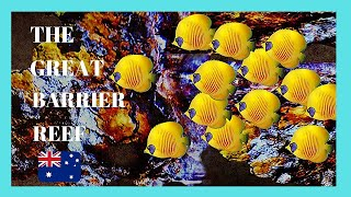getlinkyoutube.com-The GREAT BARRIER REEF, fantastic underwater videos, Queensland (Australia)