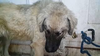 getlinkyoutube.com-الكلب الاعمى ما زال محاولة علاجه مستمره مع جمال العمواسي
