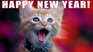 getlinkyoutube.com-FUNNY CATS SING NEW YEARS