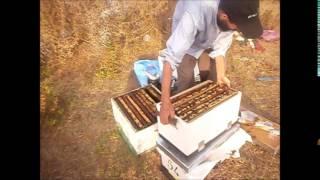 getlinkyoutube.com-منحل بنصالح تربية النحل خطوة خطوة يقدم يوميات جني العسل الجزء الاول
