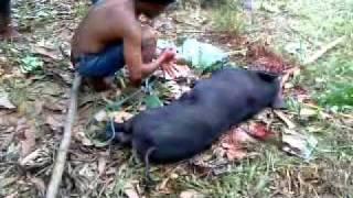 getlinkyoutube.com-Pembantaian Babi Ngepet.MP4