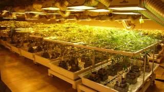 getlinkyoutube.com-A look inside 3D Cannabis Center a retail marijuana facility - Denver