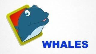 getlinkyoutube.com-Whales - Sea Animals - Pre School - Learn Spelling Videos For Kids