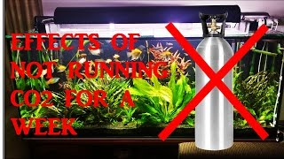 getlinkyoutube.com-Effects Of Not Running Co2 For 1 Week In My Planted Aquarium
