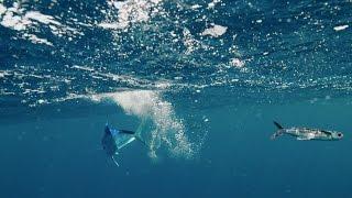 getlinkyoutube.com-Flying fish hunt - The Hunt: Episode 4 preview - BBC One