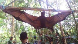 getlinkyoutube.com-Chupacabras capturado en Perú - Murcielago Gigante Nunca Antes Visto
