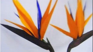 getlinkyoutube.com-Paper Flowers - Bird Of Paradise (Flower # 46)