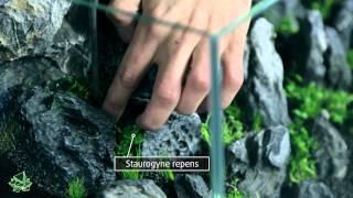 getlinkyoutube.com-ScapingFour presents Aquascaping