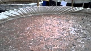 getlinkyoutube.com-Biofloc-165 Center Depok Indonesia