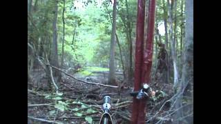 Hog hunting Encounter...No Kill...with .22 CAL SUMATRA  PELLET RIFLE....... part 1