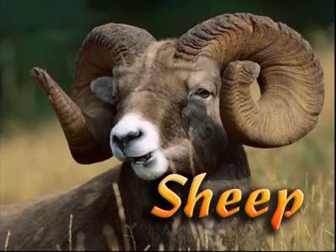 Sheep Farmimg
