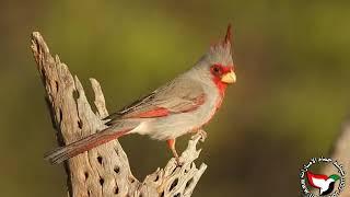 getlinkyoutube.com-اجمل انواع الطيور و أسمائها بالعربي والانجليزي