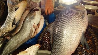 getlinkyoutube.com-Bondor Bazaar Maas Bazar (Bandarbazar) - Sylhet, Bangladesh 2014