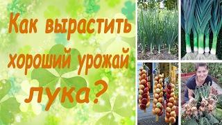 Как вырастить хороший урожай лука? (семинар, основные правила)