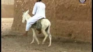 getlinkyoutube.com-SUDANESE الحي الله والدائم الله