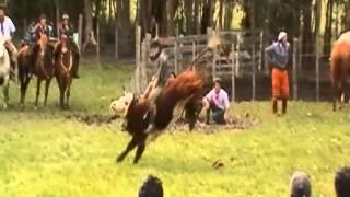 getlinkyoutube.com-2º Festival del Ternero Asociación Fomento Rural Las Cañas