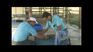 getlinkyoutube.com-Construcción de un Bebedero barato de agua para ganado