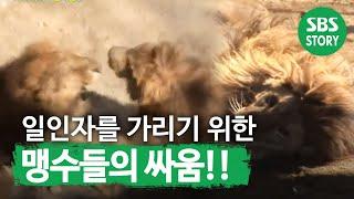 getlinkyoutube.com-TV동물농장(510회)_08