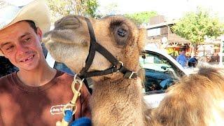 getlinkyoutube.com-CAMEL TOE PRANK BEHIND THE SCENES!