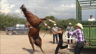 getlinkyoutube.com-Carreras de Caballos en Cumpas, Son. 3 de Octubre 2015
