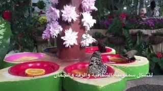 getlinkyoutube.com-Dubai Butterfly  Garden @ حديقة دبي للفراشات😊💖💐