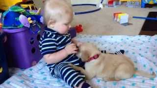 getlinkyoutube.com-Puppy Wants to Play, Baby Doesn't