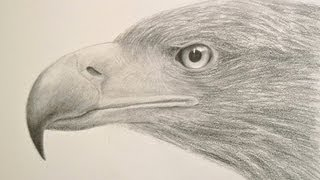 getlinkyoutube.com-How to Draw Textures: Drawing a Realistic Eagle Head- Fine Art-Tips