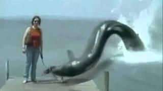 getlinkyoutube.com-ثعبان في البحر