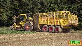 getlinkyoutube.com-[NEWS 2015] RD 80 de chez SOYEZ à la récolte des betteraves en 12 rangs [DJI & PNJ]