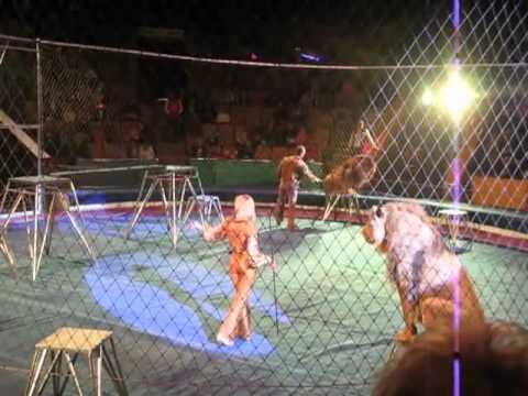 Leões atacam domador durante apresentação no Circo Lviv, na Ucrânia.